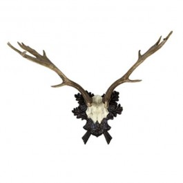 Antlers Attached to Bone/Black