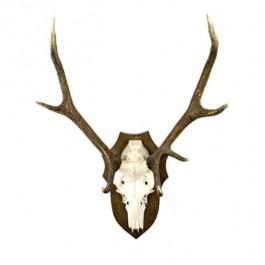 Antlers W/Bone Wood Plaque