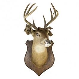 Deer W/Antler-Ears Damaged