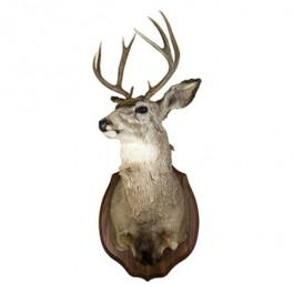 RAF Deer 10pt Antlers