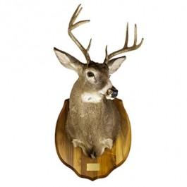 LAF Deer 8pt Antlers