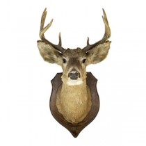 Deer Head W/Antlers Brown Base