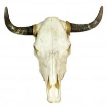 Cow Horn/Full Skull