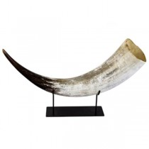 African Cow Horn